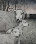 Seren Bell, Sgithwen Valley Lambs