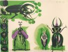 Graham Sutherland (1903-1980), Beetles I