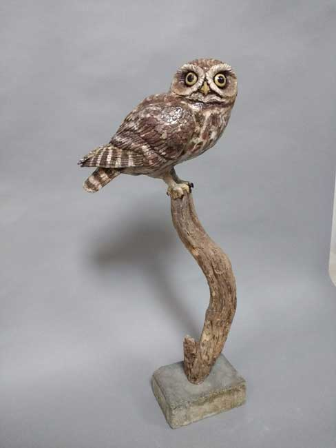 Sallie Wakley, Little Owl