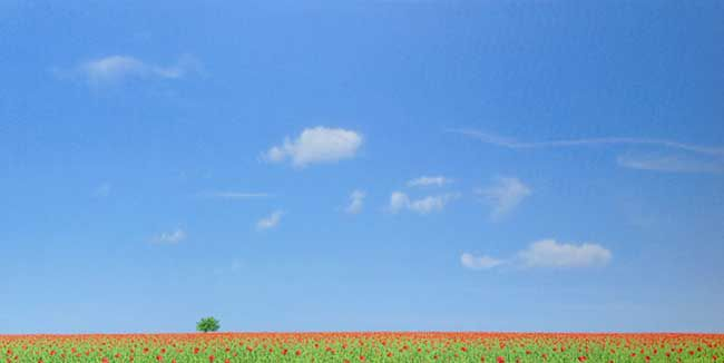 Nigel Wood, Poppy Meadow