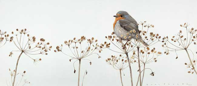 Karl Taylor, Robin And Cow Parsley